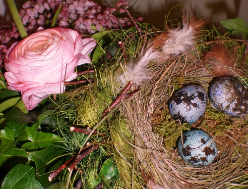Signs of Spring: Bird's Nest