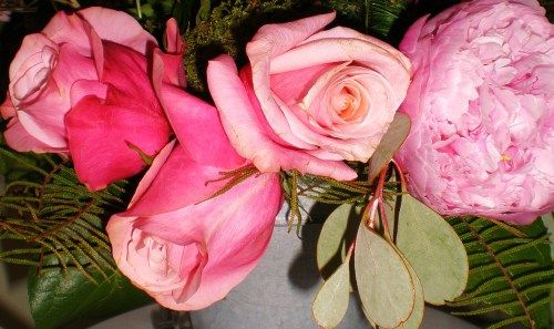 Signs of Spring: Roses and Peony