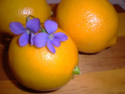 Meyer lemons and violets