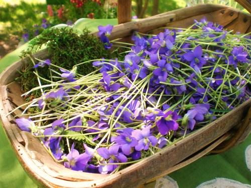 violets and garden trug