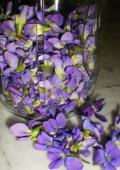 violets and quart jar