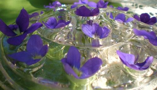 Violets in frog close2