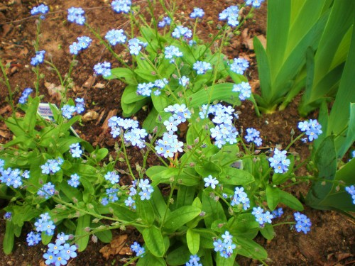 Forget me knots 2