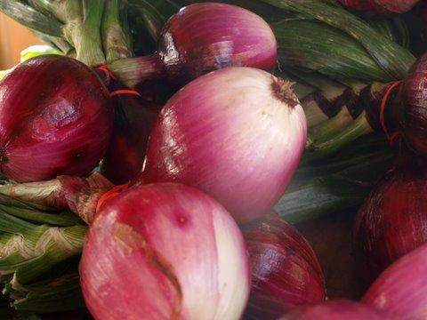 onions red FAV
