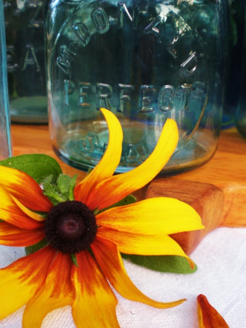 Perfect Seal and Brown eyed Susan FAV