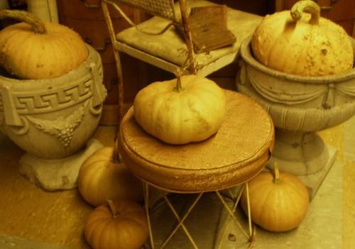 Pumpkins Fav