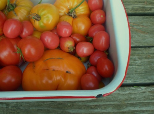 Some Tomatoes in a Pan FAV